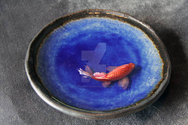 Red Koi Blue Round Bowl 2