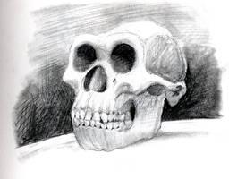 Homo Erectus Skull by Zainy7