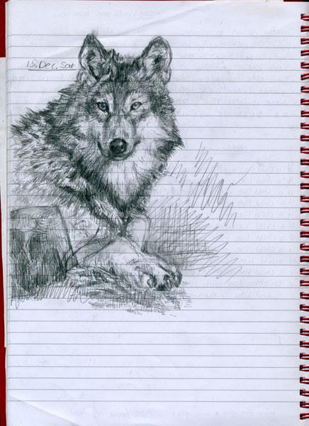 Scribble Drawing Uk : Wolf lying down listening by pen scribble on deviantart