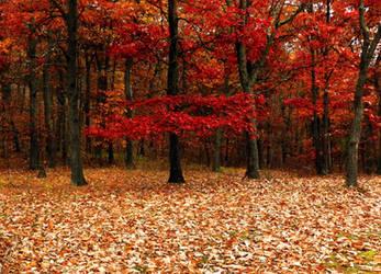 fall forest bg1