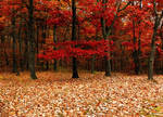 fall forest bg1 by wroquephotography