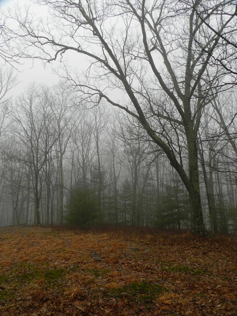 foggy forest by a - photo #15