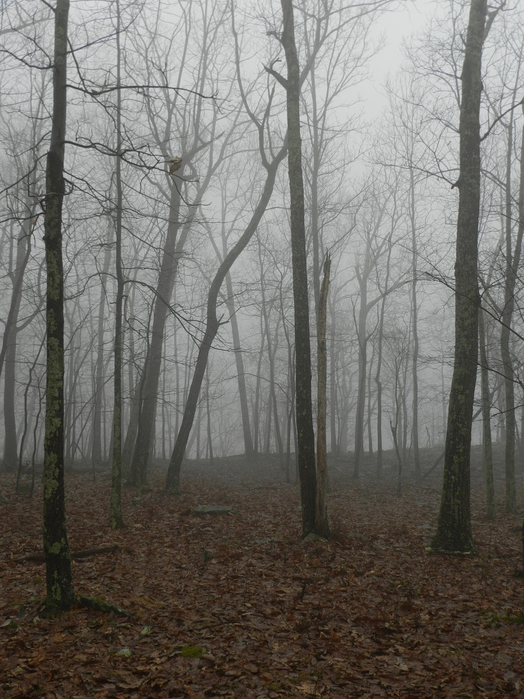 foggy forest by a - photo #10