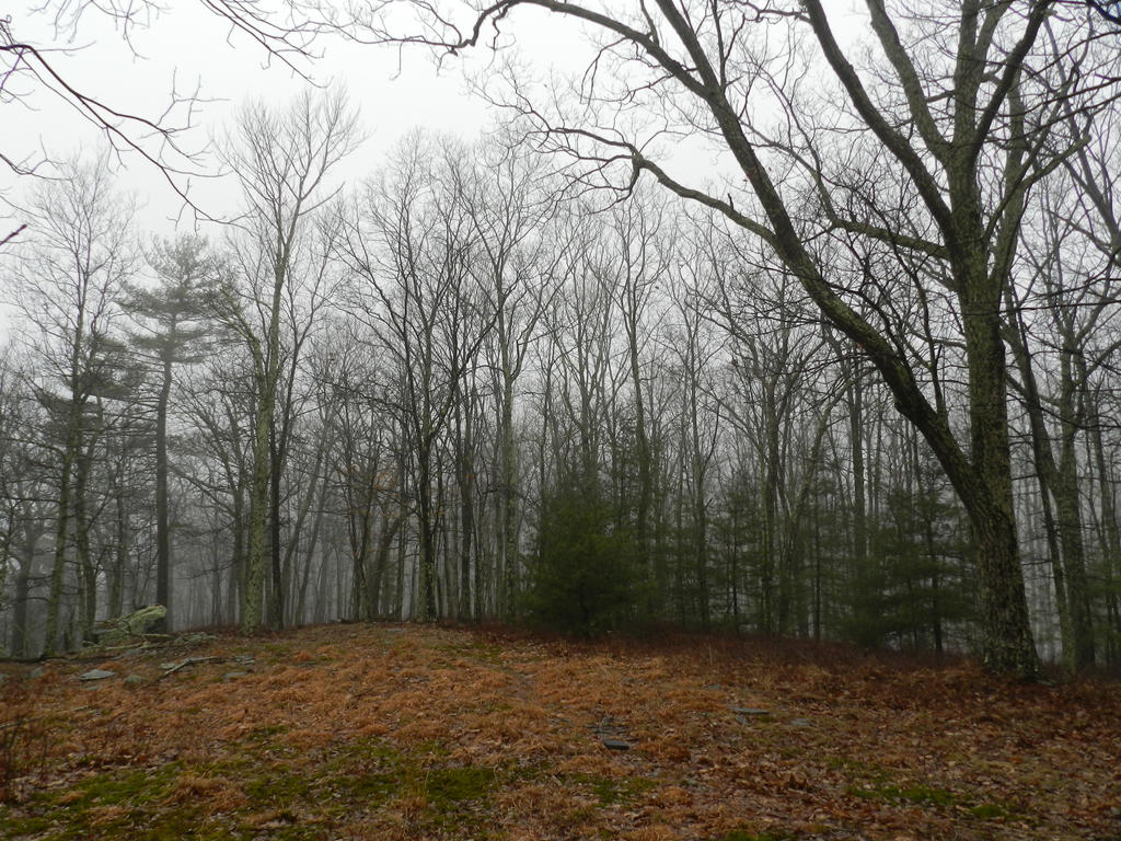 foggy forest by a - photo #18