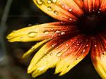 summer dew