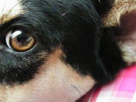 Michelle my dog.
