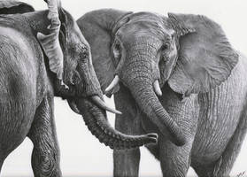 African Elephants by daniluc78