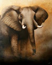 Elephant bull by daniluc78