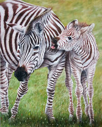 Zebra Family by daniluc78