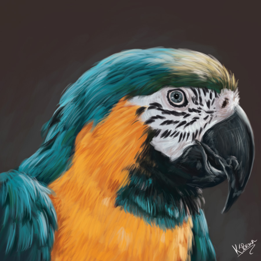 Parrot Painting on 804 html