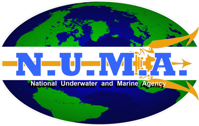 NUMA T-Shirt Logo Design by viperaviator