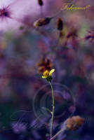 Burst of Colours by FaMz