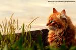 Looks Like Lion..
