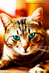 Learning Tom Cat (New iphone application) .)