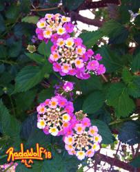 Flowers? by radawolf