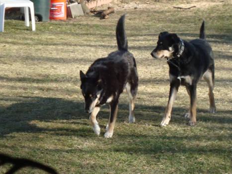 My 2 Dogs