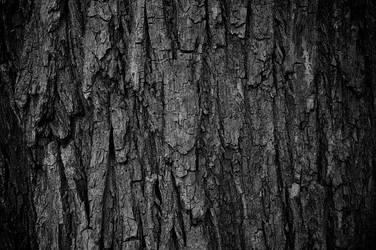 Tree Bark by Sattero
