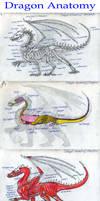 Dragon Anatomy: Wyldfire