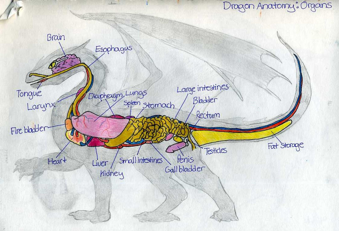 How The Hell Can Dragons Breathe Fire Page 2 Neogaf
