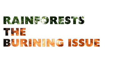 RainForests. The Issue