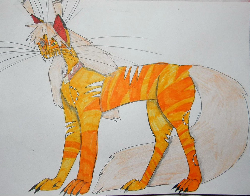 Crystal Gem cats: Firegem. by MainecoonLena