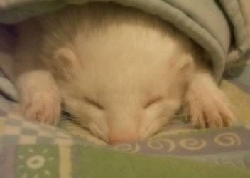 Sleeping beatuy by isacosta