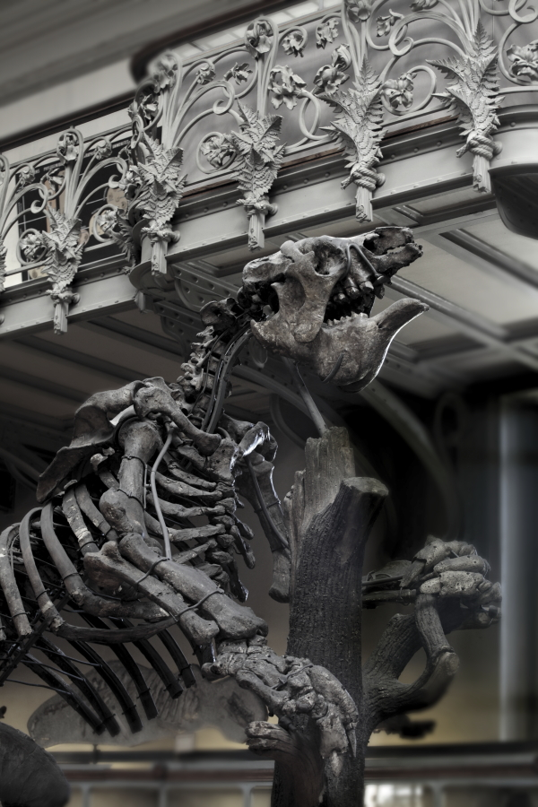 Natural History Museum, Paris by lawrencew