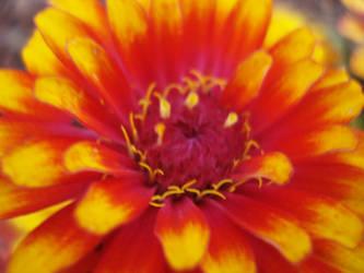 flowers by cranders