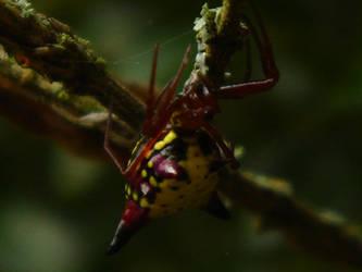 Vivid Spider by cranders