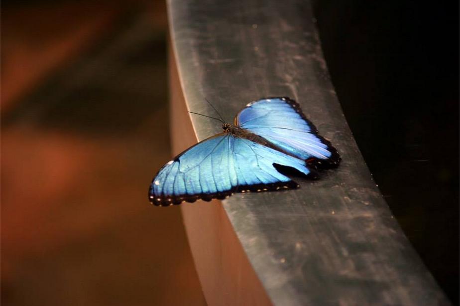Beautiful Blue by TTFNJinx