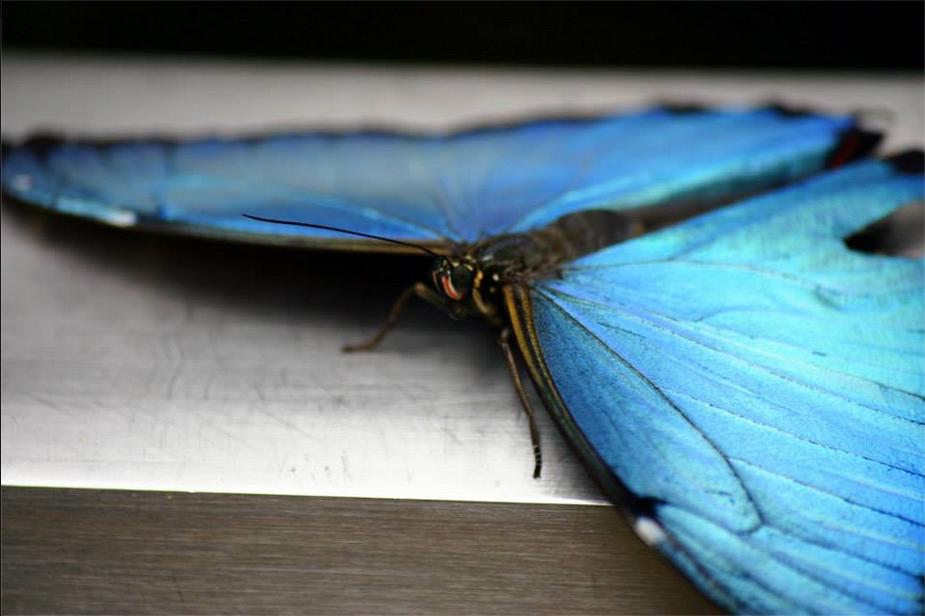 Vibrant Blue by TTFNJinx