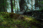 Forest 1 by Kristis-Photography