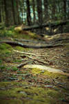 Forest Floor by Kristis-Photography