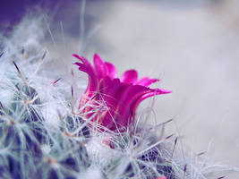 Beauty among the spikes by serendipityD