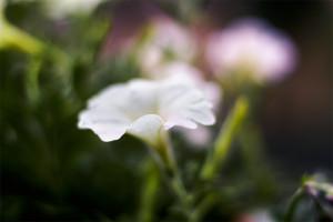 ritaphoto's Profile Picture