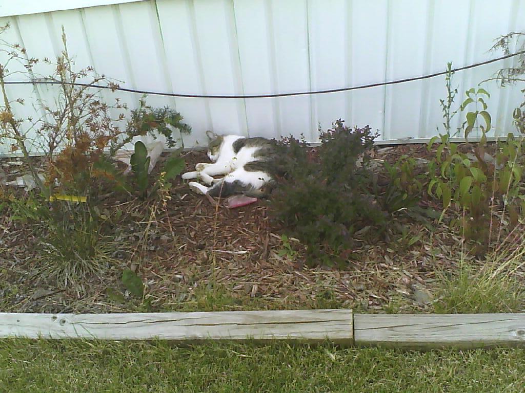 Sleepy Cat by fruckles