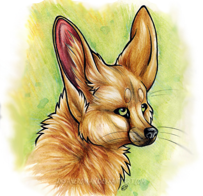 The Green Eyed Fennec by InsaneRoman