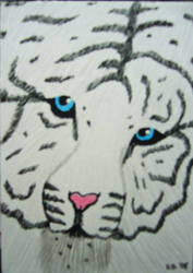 White Tiger by skullmage550