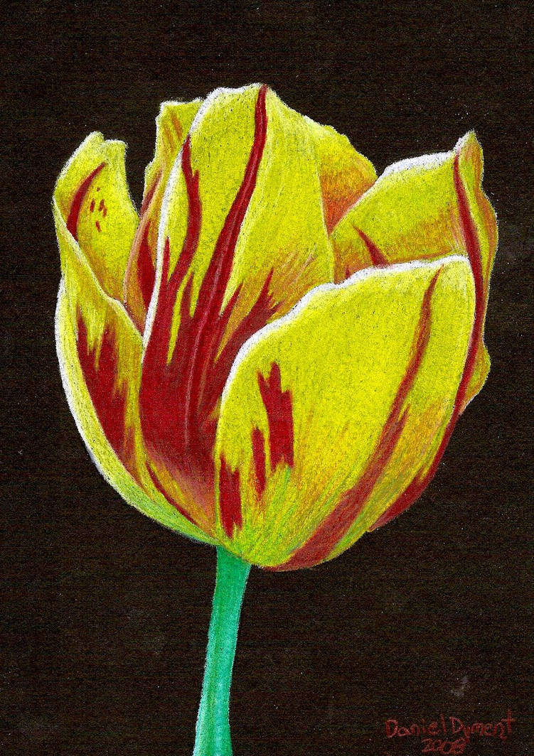 Yellow Tulip by skullmage550