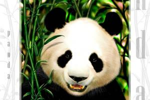 panda by SadSaturn