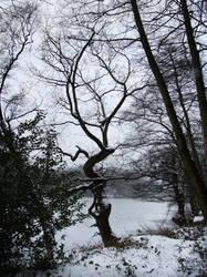 Rudyard Lake Snow 3 by Ravven-Stock