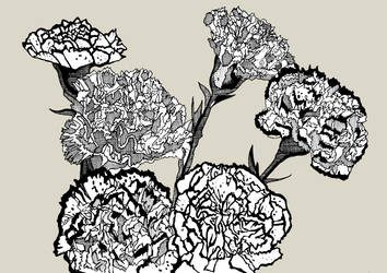 Carnations by daniellekenyon