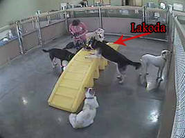 Lakoda is at Day Care!