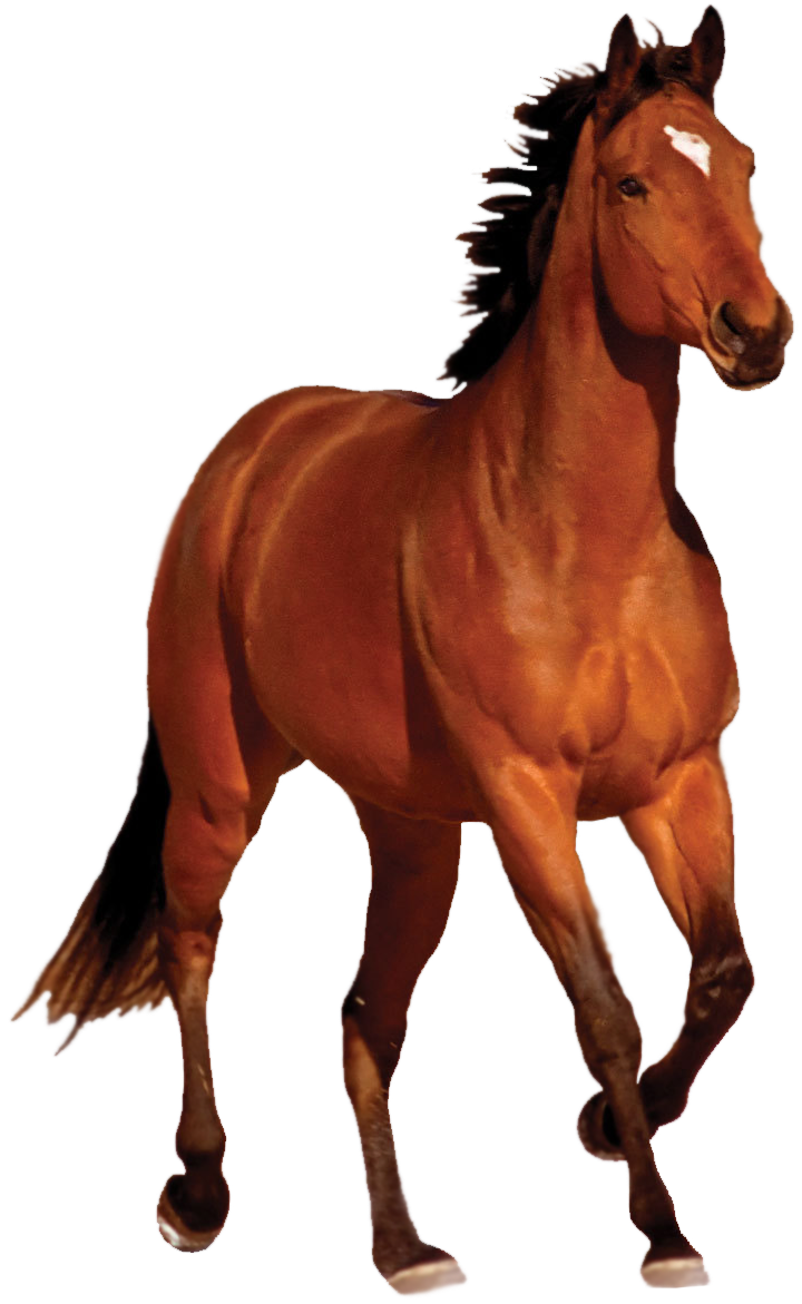 horse_png_by_captainjackharkness-d7iv5bg.png Running Horse Png