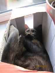 Cat in the Box by Syjana