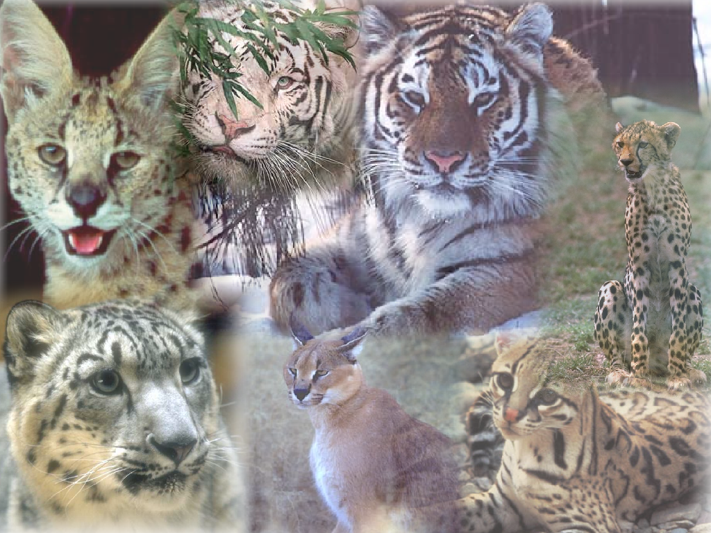 Big Cat Wallpaper by VirusMetalGarurumon