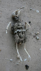 Mummified bird 1
