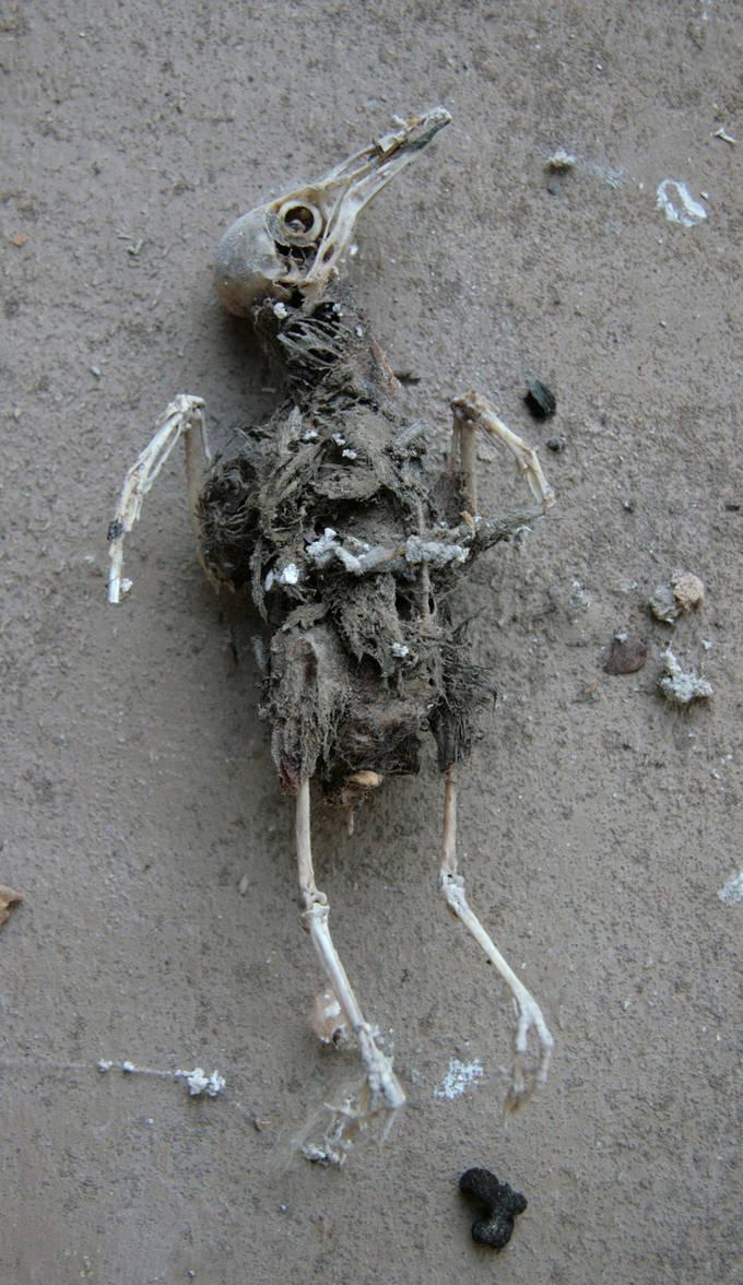Mummified bird 1