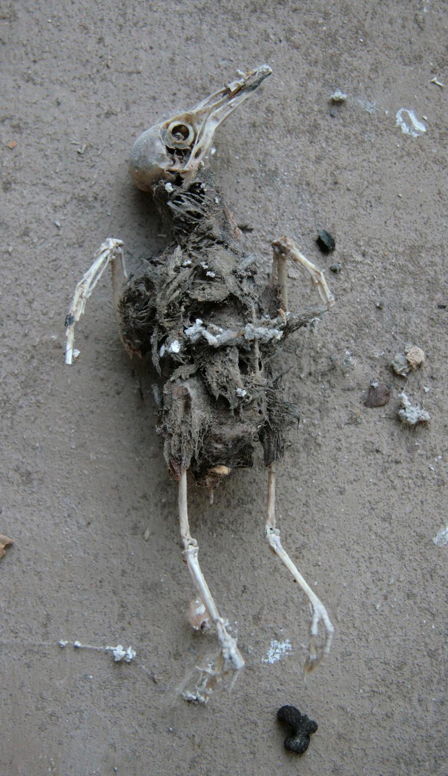Mummified bird 1 by barefootliam-stock