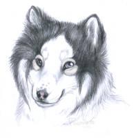 Algor Portrait by PoonieFox